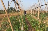 Phấn đấu về đích nông thôn mới năm 2018