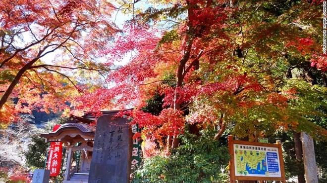 Ngất ngây sắc thu ở Nhật Bản - 7