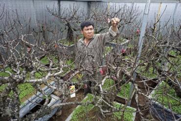 Gian nan nghề trồng đào Thất thốn