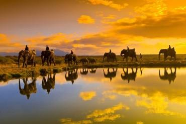 Ghé thăm xứ sở đầy sức sống tại Nam Phi