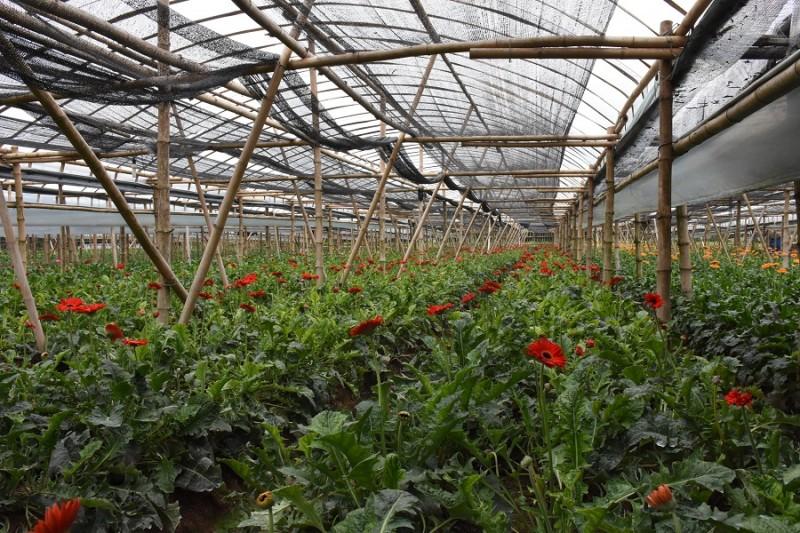Ứng dụng nông nghiệp công nghệ cao: Giảm nỗi lo được mùa - mất giá