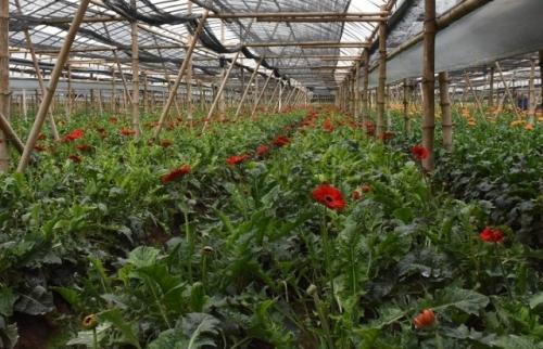 Đẩy mạnh sản xuất các giống cây trồng, vật nuôi năng suất cao