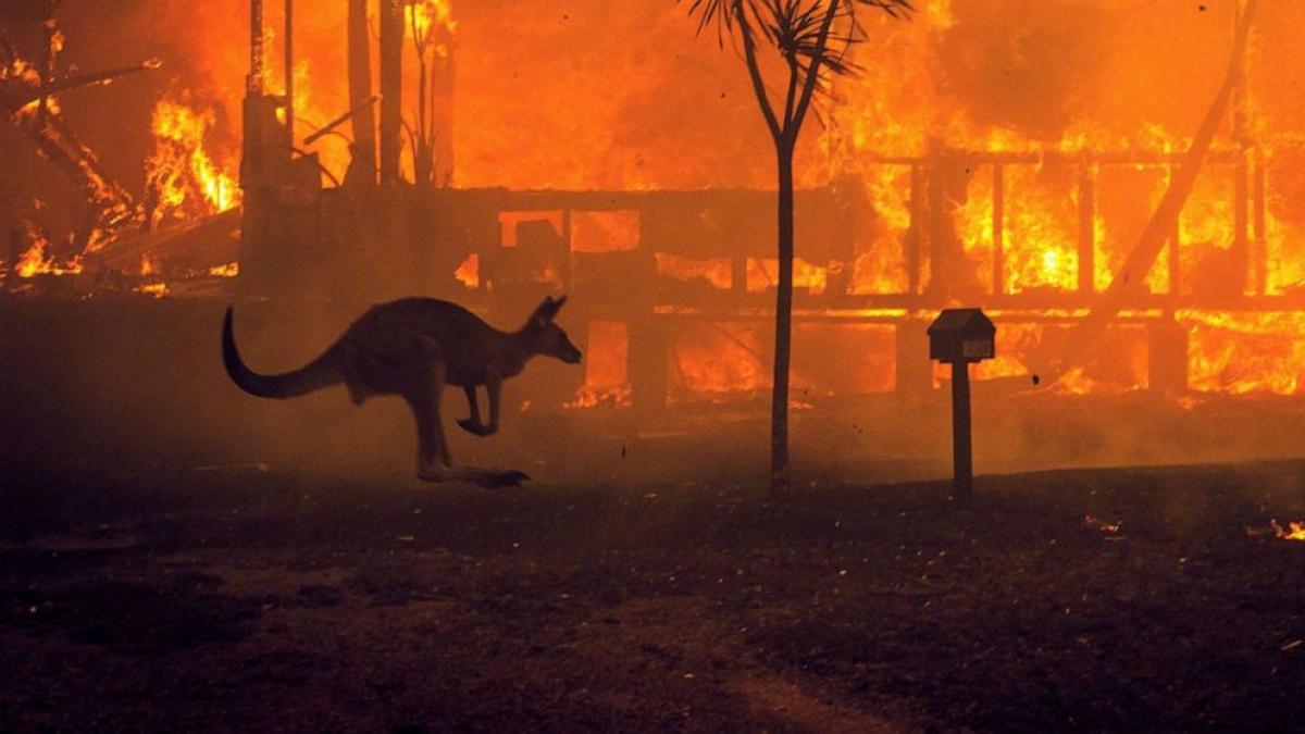 Một con kangaroo lao qua ngôi nhà đang bốc cháy ở Hồ Conjola, bang New South Wales, Australia. Năm 2020, Australia đã phải hứng chịu một đợt cháy rừng tàn khốc. Ảnh: New York Times