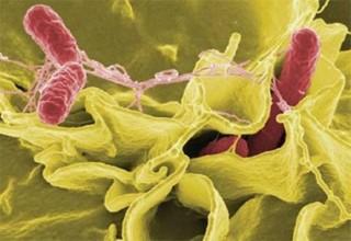 6 thủ phạm chính gây ngộ độc thực phẩm