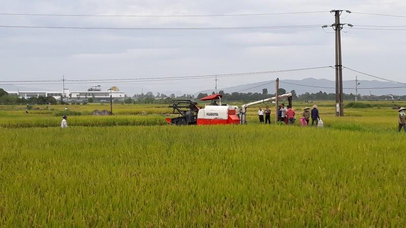 huyen quoc oai phan dau gieo trong 5700ha trong vu xuan 2019