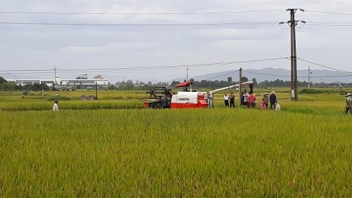 Huyện Quốc Oai phấn đấu gieo trồng 5.700ha trong vụ xuân 2019