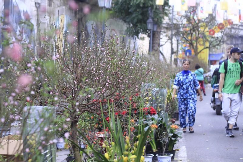 pho bich hoa phung hung nhon nhip ngay cuoi nam