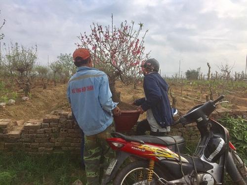 Dịch vụ chăm sóc cây cảnh đắt hàng sau Tết