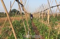 Triển khai kế hoạch thực hiện nhiệm vụ về đích huyện nông thôn mới năm 2019