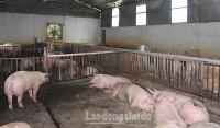 Hà Nội: Tập trung phòng, chống dịch bệnh động vật