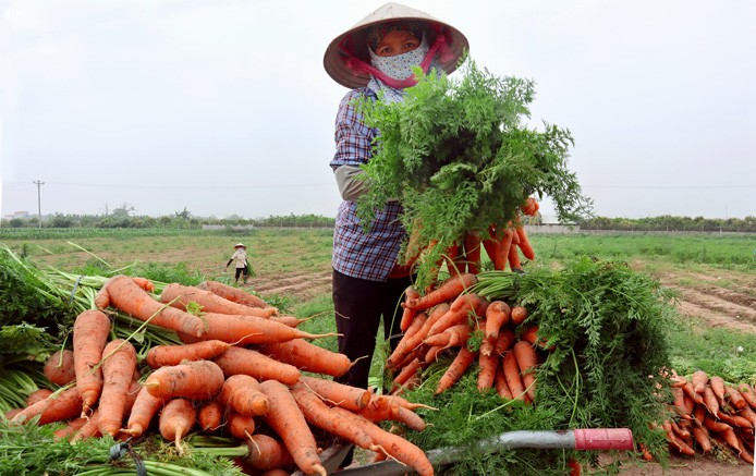 Huyện Phú Xuyên: Phấn đấu về đích nông thôn mới trong năm 2019