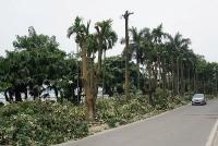Người dân Trích Sài ủng hộ chuyển cây hoa sữa từ hồ Tây lên bãi rác Nam Sơn