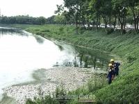 Cá chết tại hồ điều hòa Yên Sở: Do sốc nhiệt