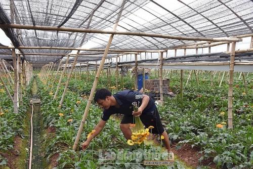 Đẩy mạnh phát triển nông nghiệp theo hướng hiện đại, năng suất cao