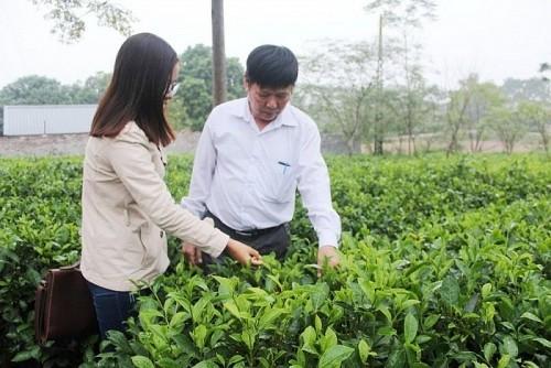 Đẩy mạnh trồng trọt, chăn nuôi góp phần phát triển kinh tế