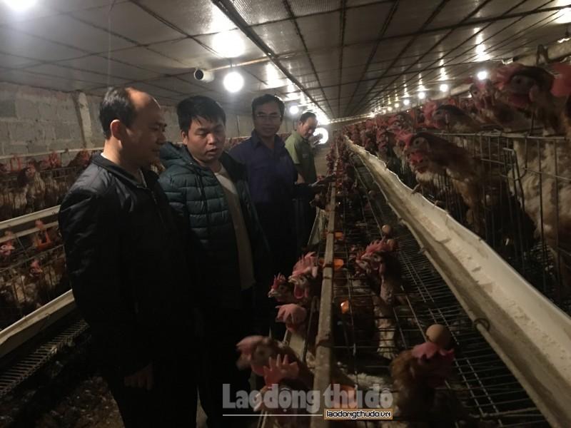 Phát triến kinh tế nhờ đẩy mạnh chăn nuôi