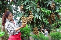 Đẩy mạnh phát triển nông nghiệp