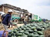 Rau quả Việt Nam xuất mạnh sang Trung Quốc