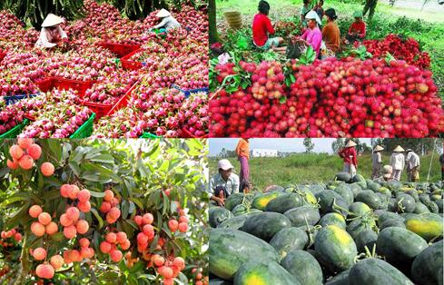 Hàng rau quả tạo bứt phá nhờ Việt Nam tăng xuất khẩu sang Trung Quốc