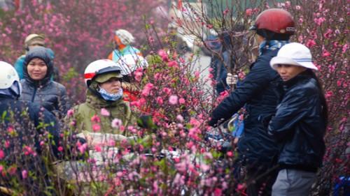 Thời tiết Tết Nguyên đán Kỷ hợi 2019: Miền Bắc rét đậm, rét hại?