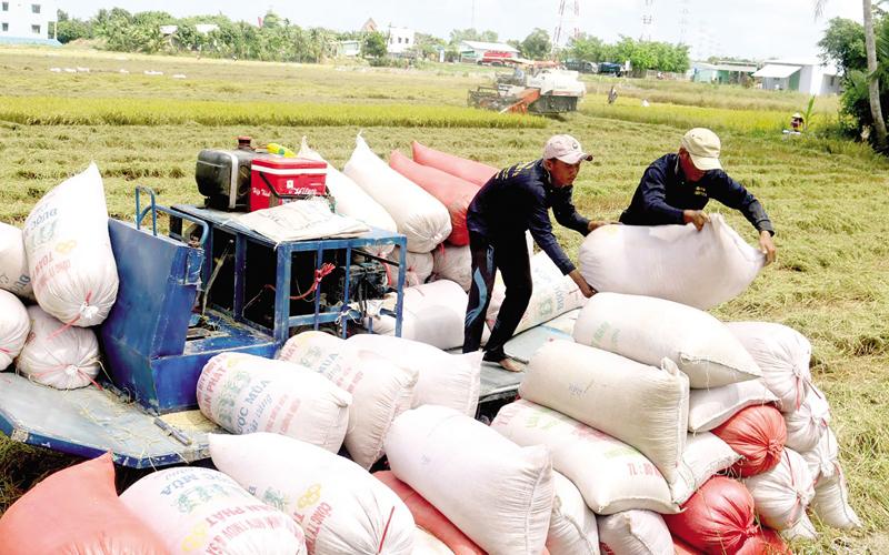 Vì sao Việt Nam nhập khẩu gạo?