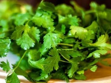 Khám phá những lợi ích tuyệt vời của rau mùi đối với sức khỏe