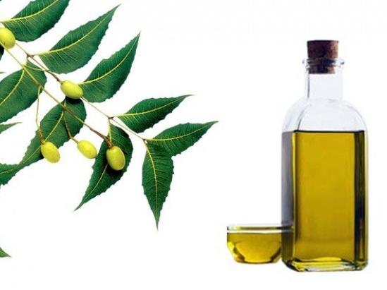 10 loại tinh dầu chống lão hóa da hoàn hảo