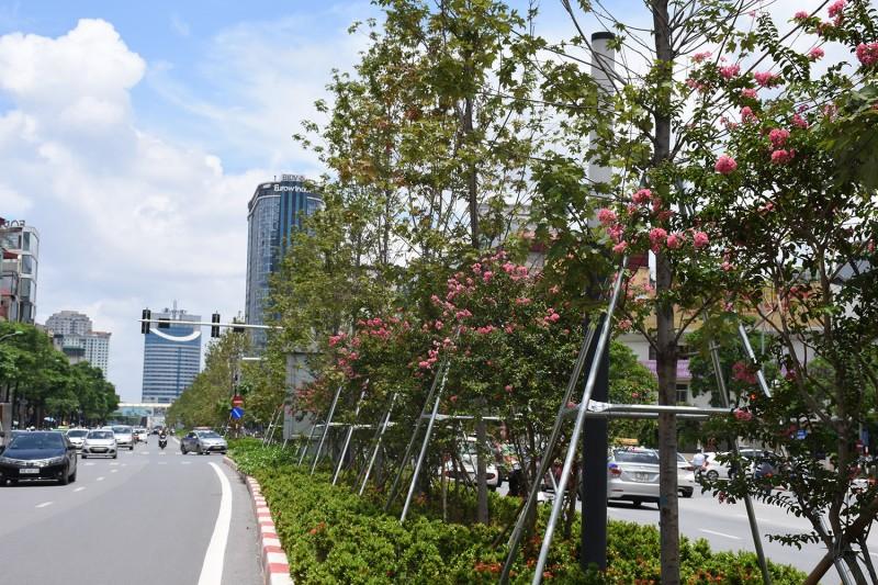 Từ 2019 - 2020: Hà Nội đặt mục tiêu trồng mới 600.000 cây xanh