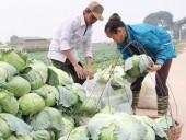 Nông dân xót lòng với giá rau