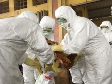 Hà Nội: Sẵn sàng đối phó với dịch cúm A/H7N9