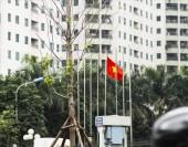 Hà Nội: Phố cây phong lá đỏ khoe những chiếc lá đầu tiên