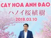 Hà Nội nhận thêm 500 cây hoa anh đào Nhật Bản