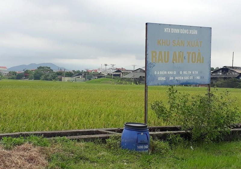 Nông sản Việt vẫn gặp khó khi vươn ra thế giới