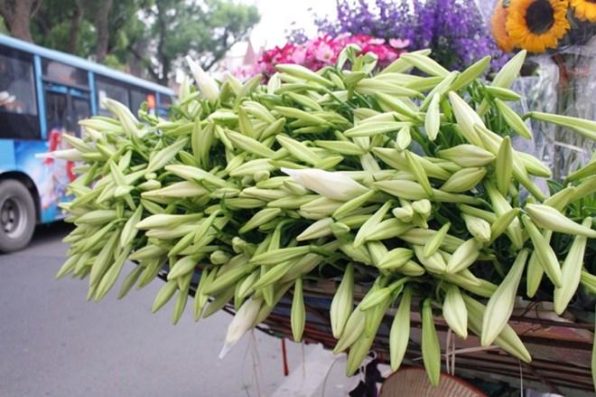 Hà Nội: Giá hoa loa kèn giảm nhẹ so với đầu mùa