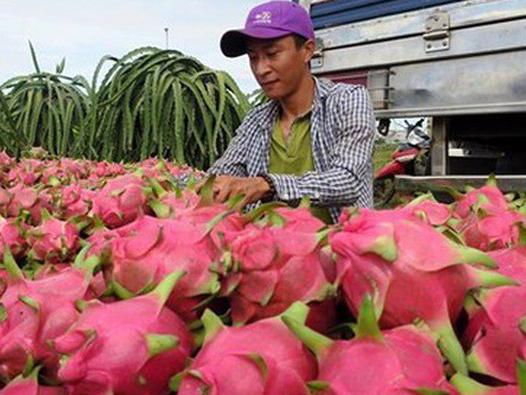 Từ 1/4, hoa quả Việt xuất sang Trung Quốc sẽ bị truy xuất nguồn gốc