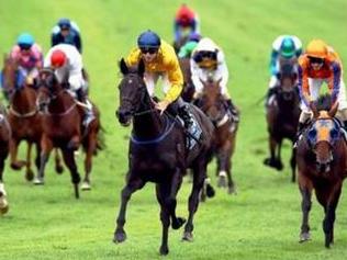 Quy định tiêu chuẩn trọng tài, cơ sở vật chất với hoạt động đua ngựa