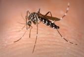 Bệnh sốt rét có nguy cơ quay lại