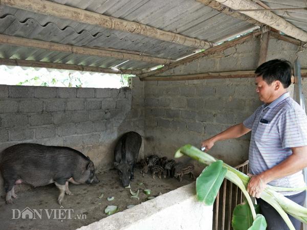 Giữa cơn 'bão giá', lợn rừng vẫn bán được 120.000 đồng/kg hơi
