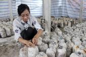 Nữ sinh viên trẻ làm giàu bằng nghề nông