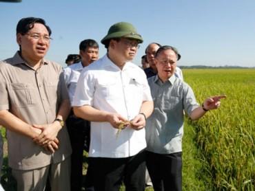 Xây dựng nông thôn mới ở Hà Nội: Đi đầu trong giải quyết nợ xây dựng cơ bản