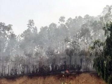 Huy động 4 xe cứu hỏa dập tắt đám cháy rừng tại Bãi Cháy