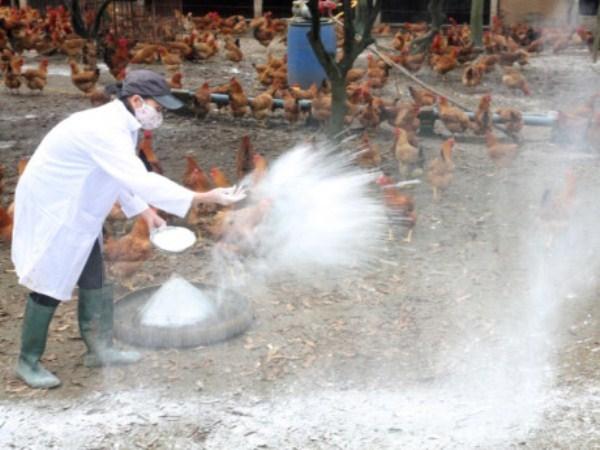 Cục Thú y công bố hết dịch cúm gia cầm trên toàn quốc