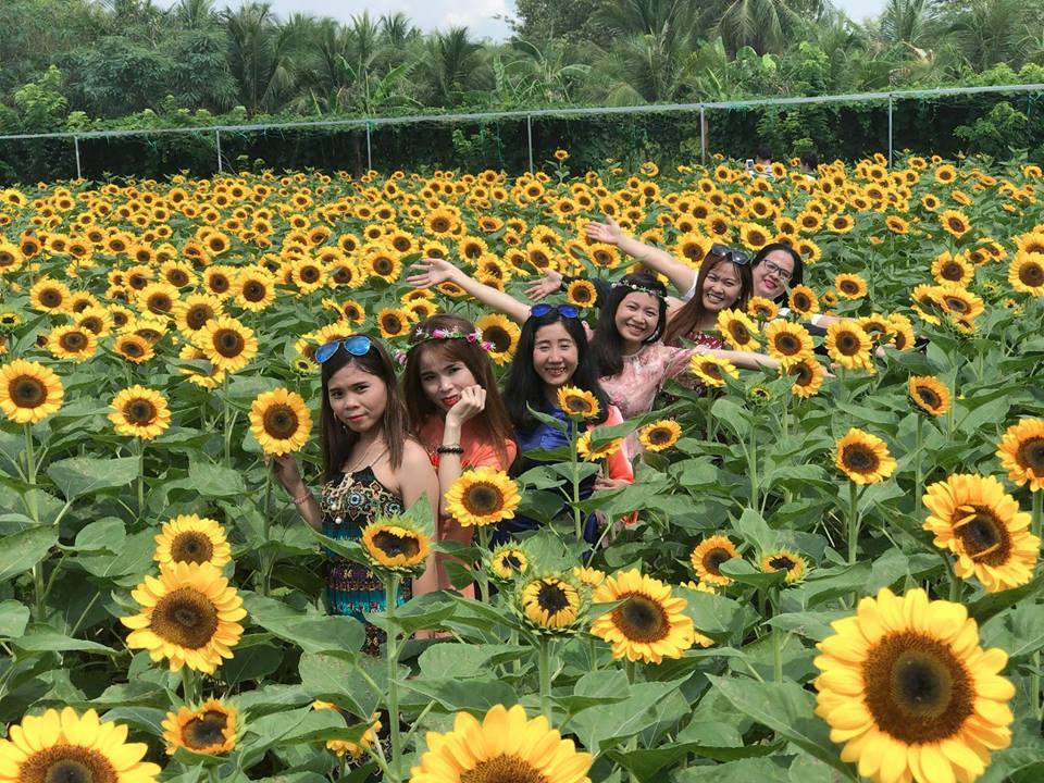 'Phát cuồng' với cánh đồng hoa đẹp như cõi mơ ở Tiền Giang