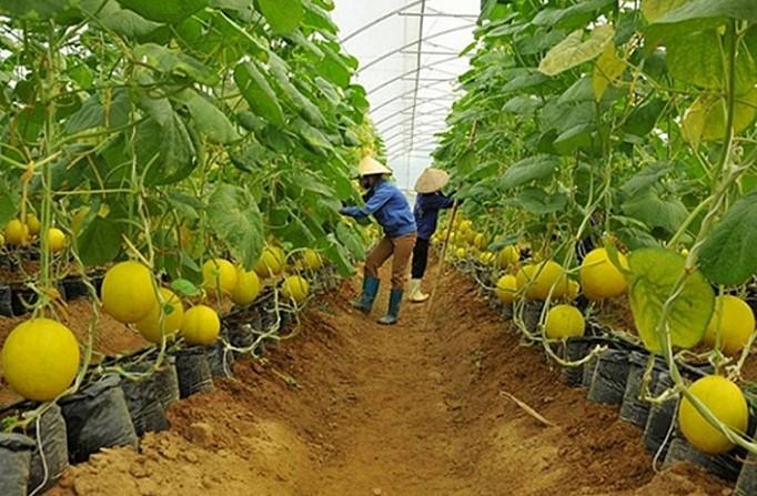 Nông nghiệp thời 4.0: Thiếu lao động có trình độ cao