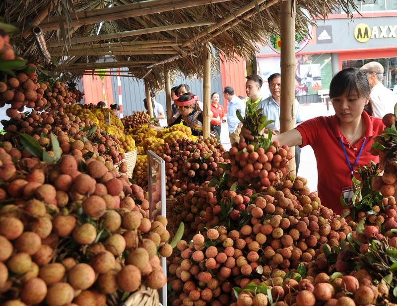 Phát triển nông sản bền vững: Bài học từ vải thiều Lục Ngạn