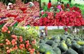 Xuất khẩu rau quả Việt Nam tăng cao, Trung Quốc vẫn là thị trường lớn