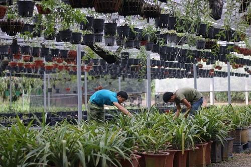 """Khu vườn lan đột biến """"đáng giá bạc tỷ"""" ở Hà Nội"""