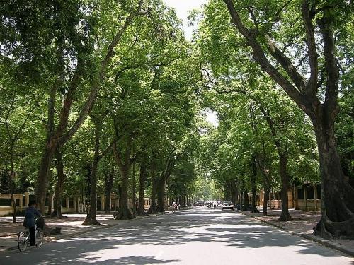 Xâm hại cây xanh đô thị: Song hành xử phạt nghiêm và nâng cao ý thức