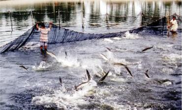 Yêu cầu làm rõ việc cấp giấy chứng nhận thức ăn thủy sản