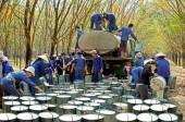 Công đoàn Cao su Việt Nam: Đảm bảo chăm lo đời sống người lao động
